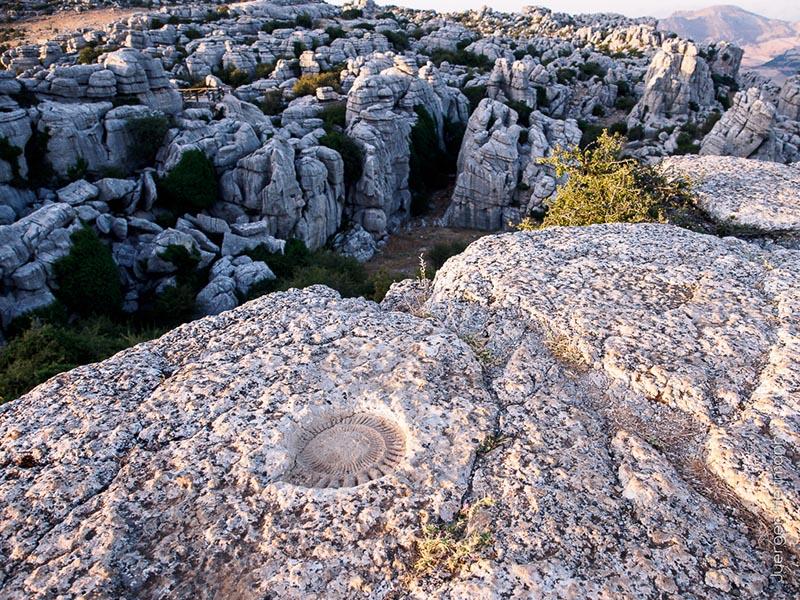 Ammoniten Torcal